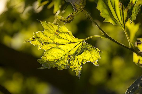 Beginn des Herbstes - © Helga Jaramillo Arenas - Fotografie und Poesie / September 2018