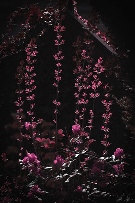 Lichterregen - © Helga Jaramillo Arenas - Fotografie und Poesie / Mai 2015