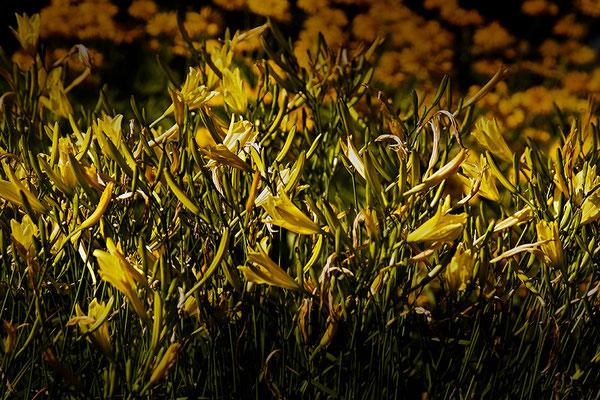 Sonnenglühen - © Helga Jaramillo Arenas - Fotografie und Poesie / Juli 2013