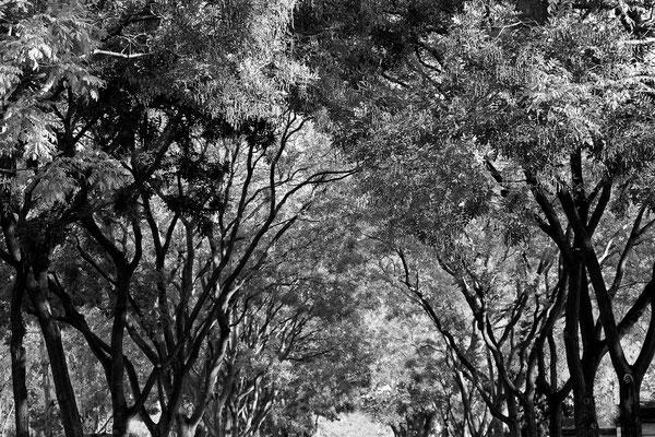 Der Zauber der Bäume - © Helga Jaramillo Arenas - Fotografie und Poesie / November 2015