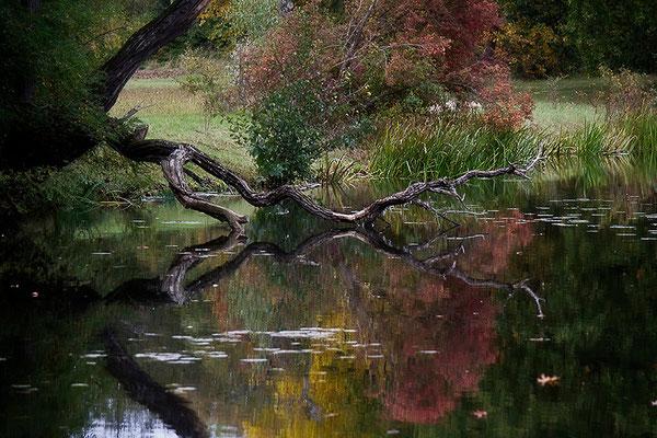 Der Herbst - © Helga Jaramillo Arenas - Fotografie und Poesie / Oktober 2012