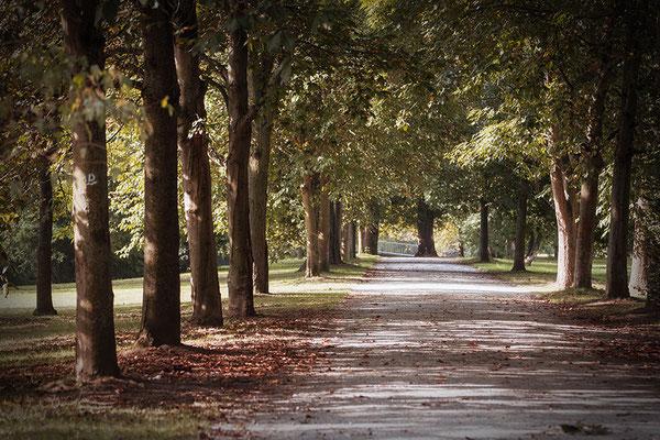 Die leise Erinnerung des Herbstes - © Helga Jaramillo Arenas - Fotografie und Poesie / August 2016