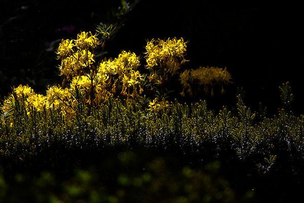 Geheimnis - © Helga Jaramillo Arenas - Fotografie und Poesie / Juni 2012