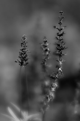 Leise - © Helga Jaramillo Arenas - Fotografie und Poesie / Oktober 2017