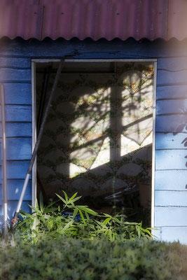 Sommerglück in Nachbars Garten - © Helga Jaramillo Arenas - Fotografie und Poesie / August 2018