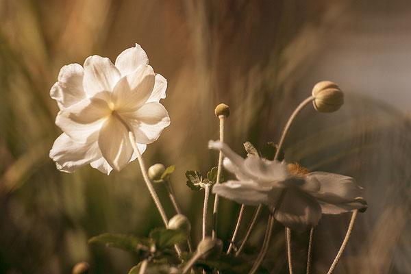 Der Herbst beginnt - © Helga Jaramillo Arenas - Fotografie und Poesie / Oktober 2017