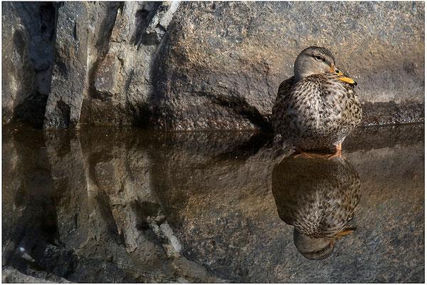 """""""Ich seh´ Dich!"""" - © Helga Jaramillo Arenas - Fotografie und Poesie / Oktober 2012"""