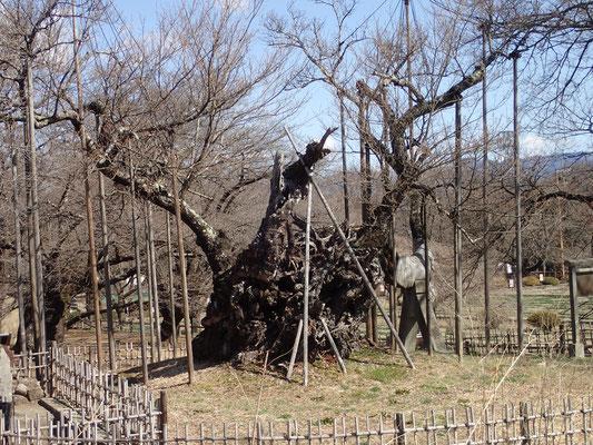 3月16日 暖かく穏やか、農作業でも汗がにじみます。