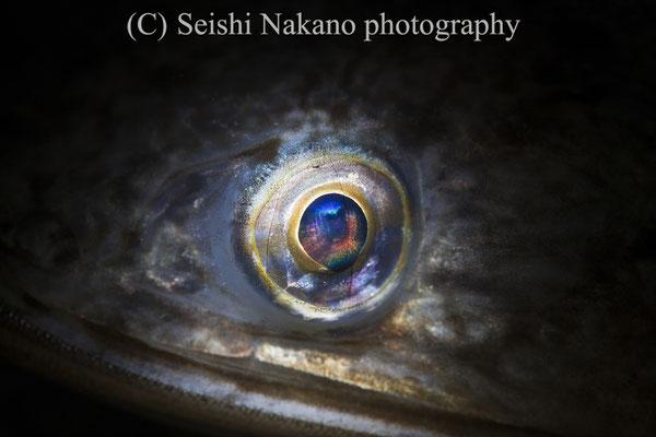 オキエソの目