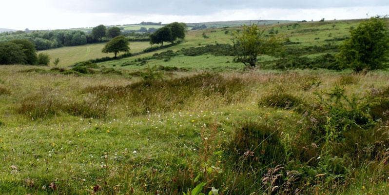 Exmoor (Au Bout des pieds)
