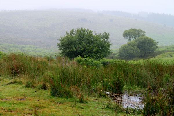 Dartmoor (Au Bout des pieds)