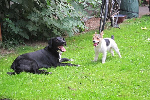 Paco mit Freund