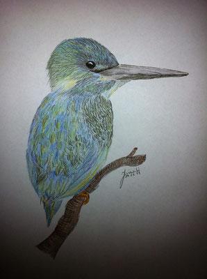 Eisvogel <3