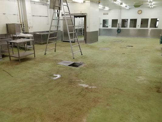 食品工場 床 カビ取り施工
