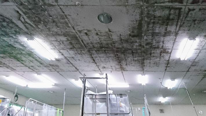 食品工場でカビ取り施工