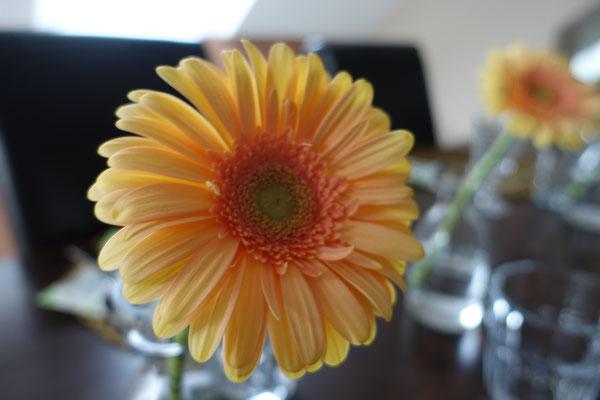 Mädchenvöllerei Pi mal Butter - Gerbera Blume