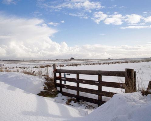 Sneeuwduinen met op de achtergrond een schapenboet.