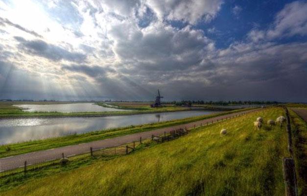 """De watermolen """"Het Noorden"""" met rechts de waddendijk met schapen te Oosterend."""