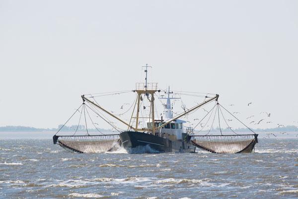 Garnalenvisser met opgehaalde netten.