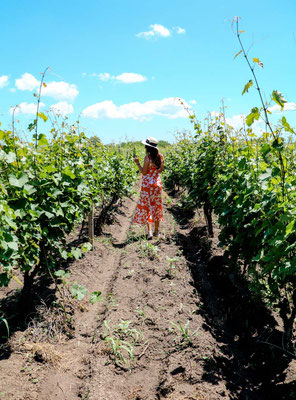 Weinfelder Kachetien und Weinverkostung