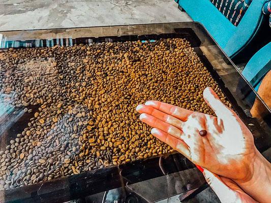 Kaffeetour in Riu Dulce