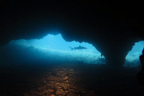 Höhlentauchgang bei Gato Island Malapascua, White Tip Sharks