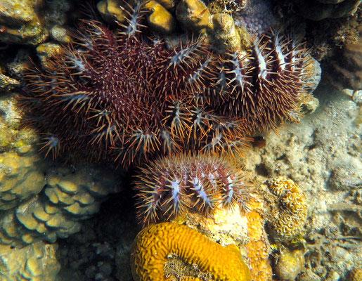 Unterwasserwelt auf den Philippinen