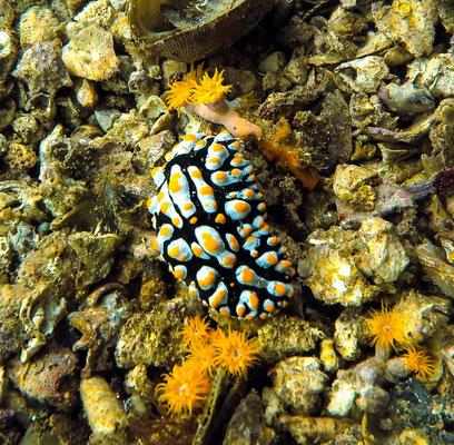 Unterwasserwelt bei Gato Island Philippinen