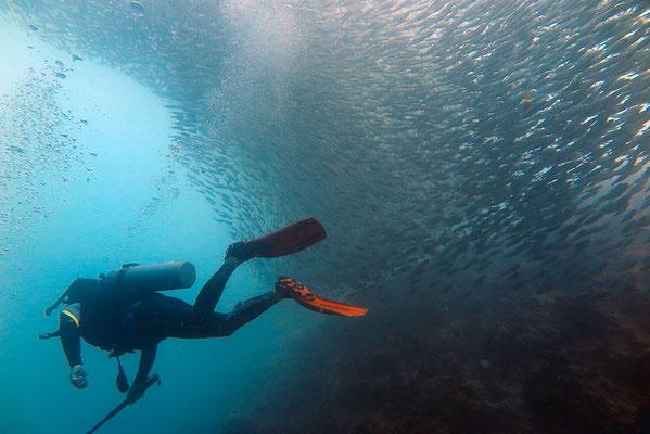 Schnorcheln Cebu mit Sardinen