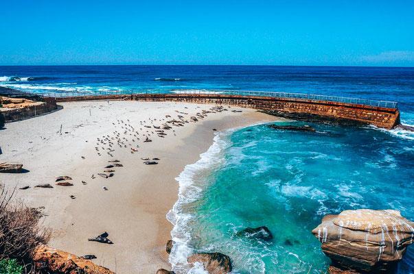 Seelöwen in San Diego am Strand