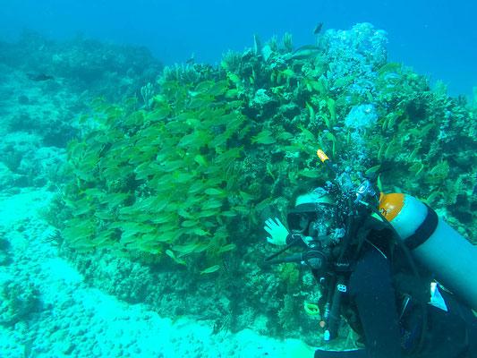 Tauchen auf Isla Mujeres