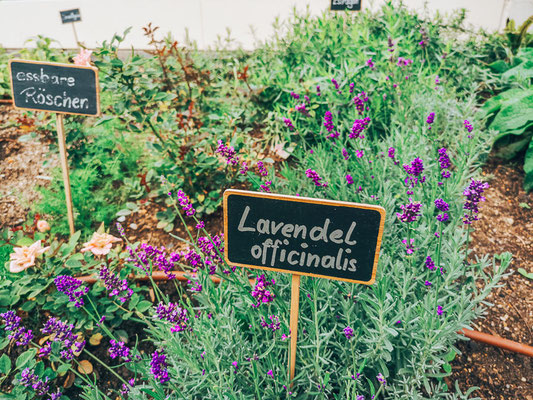Garten im lapura Womens Health Resort Kamptal