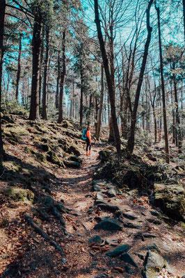 Wanderweg Hoherbogen, bayerischer Wald