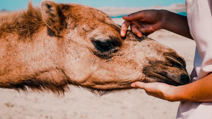 Oman Kamel