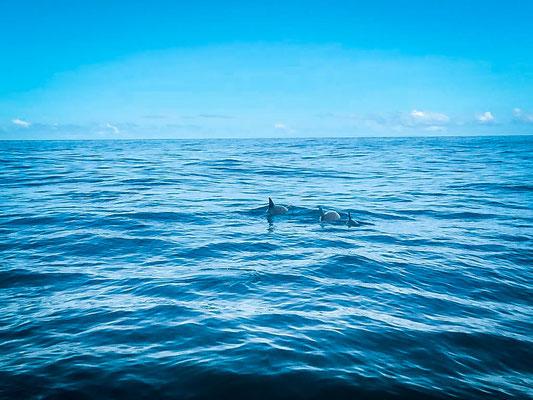 Schnorcheln mit Delfinen auf Mauritius