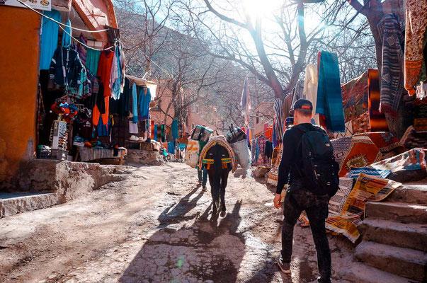 Maultier trägt Koffer zu unserer Unterkunft in Imlil