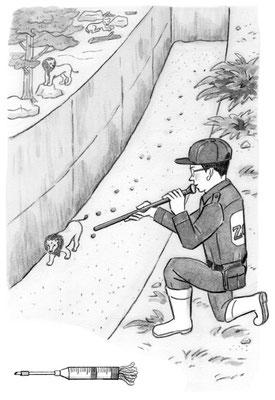 挿絵_動物園勤務。堀に落ちたライオンを助ける