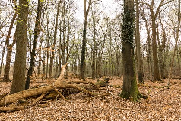 Naturwaldparzelle (Größe ca. 20 ha) am Jägerkreuz.