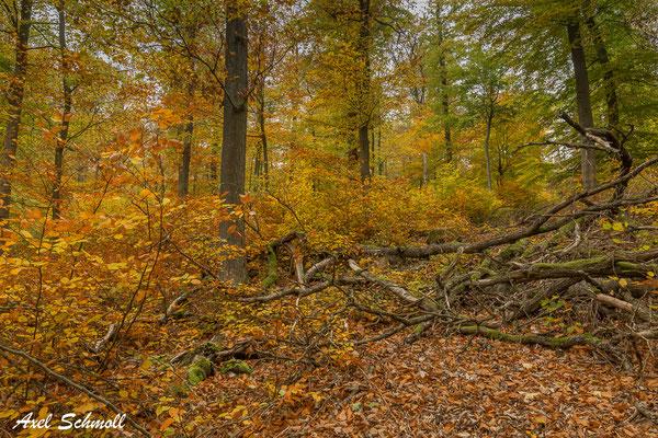 Waldweg unaufgeräumt, so soll es in einem naturnahen Wald aussehen