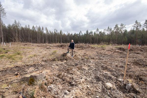 Auf der Kahlfläche, einem ehemaligen Fichtenforst (vermutlich nach verfehlter Forstwirtschaft der vergangenen Jahrzehnte, Dürre und Borkenkäferkalamität stark abgängig). Der Boden wurde stark befahren und bearbeitet.  Die Fläche wurde komplett beräumt.