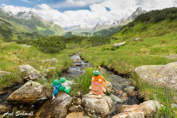 Alpenpanorama am Wiegensee mit typischer Hochgebirgsfauna