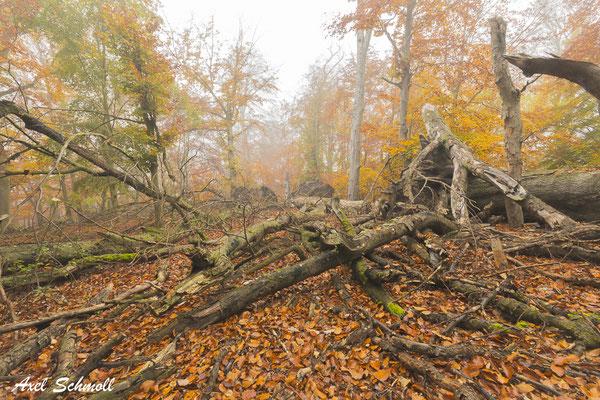 Das Wiegental zeichnet sich durch einen enormen Anteil an Totholz aus.