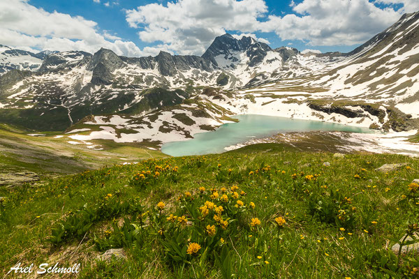 Alpenpanorama mit Tüpfel-Enzian