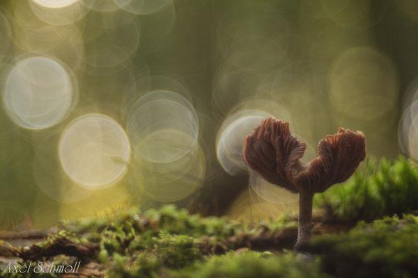 Untergehender Pilz