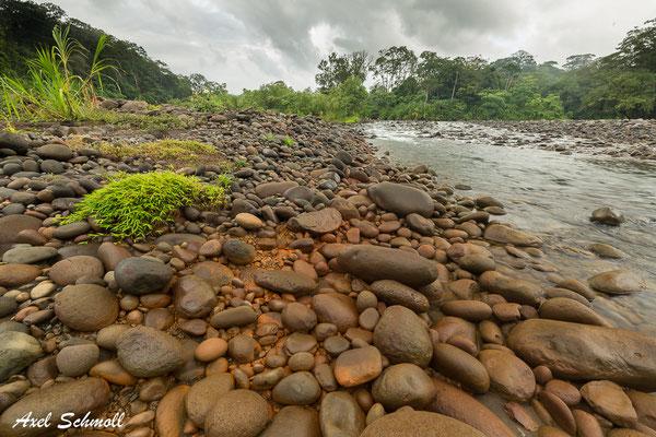 Rio Sarapiqui bei Chilamate