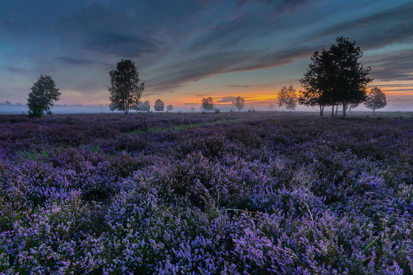 Morgenstimmung in der Heide