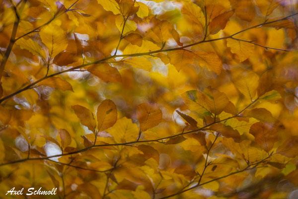 Herbstlaub - Doppelbelichtung