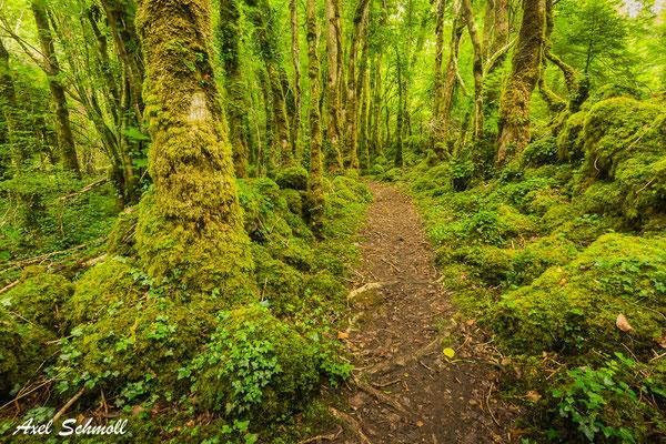 Irland - Dromore Wood
