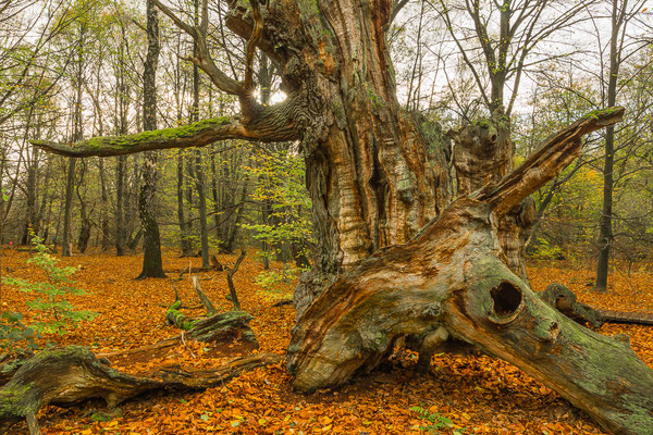 Kleiner Stern im alten Holz