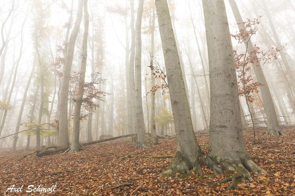 Es gibt zu viele struktur- und artenarme Wälder, die durch zu viele Wege zerschnitten wurden. Waldböden werden zu intensiv befahren, und vielerorts ist das Waldinnenklima durch Auflichtung und zu starke Holzentnahme geschädigt. (Pierre Ibisch, 2019)